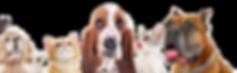 כלבים בדף צור קשר