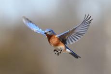 מה הייעוד שלי- על ציפורים ואנשים
