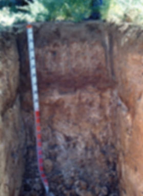 8 Solonised Brown Soil.jpg