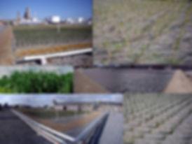 20200513_Mobil Reedbed Image.jpg