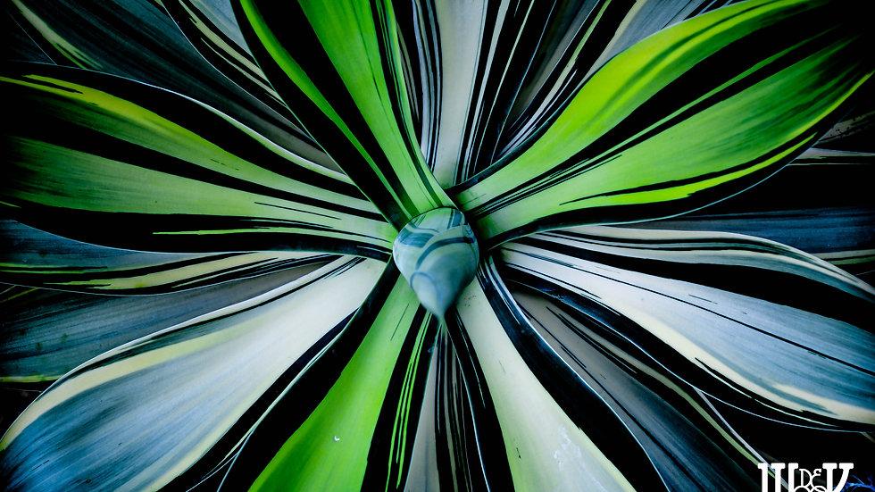"""Random Flower 01.26.15 (10""""X15"""" Paper)"""