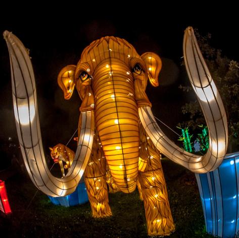 2019 China Lights Wisconsin
