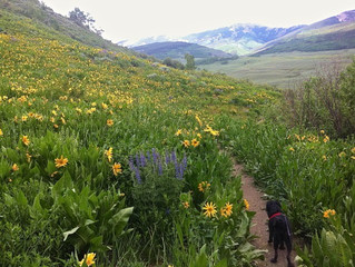 Crested Butte Trails: Whetstone Vista To Upper Loop