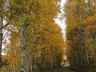 The Best Places to See the Most Vibrant Fall Foliage in Central Colorado