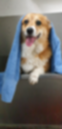 hond.png