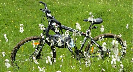 Bicicleta-flori.jpeg