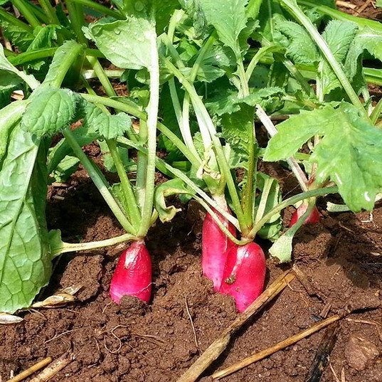 Zesty little garden snacks.jpg