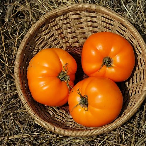 Valencia Tomato
