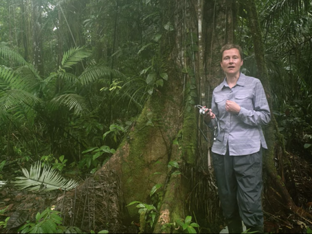 Listening to trees in Amazonia
