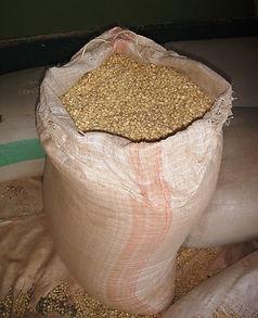Maize 1.jpg