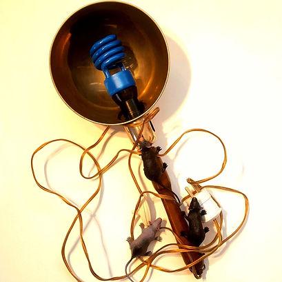 UV blue lamp disinfection