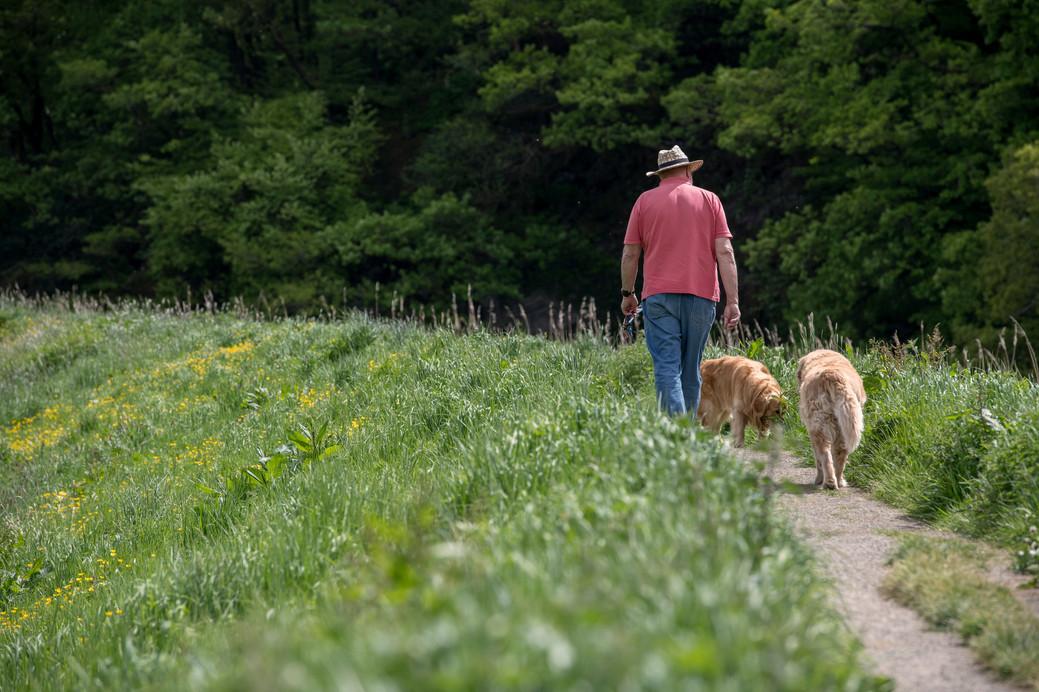 Dog walker in Devon