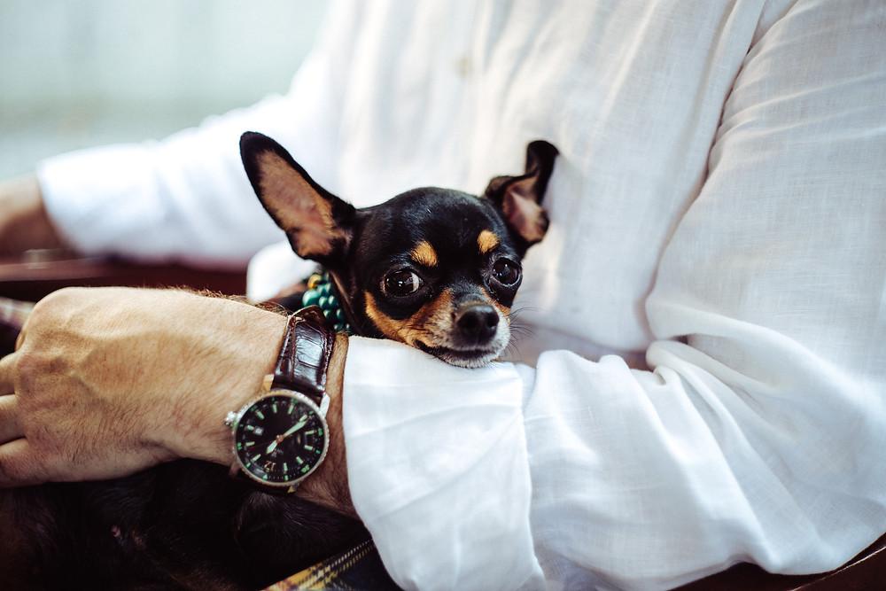 Friendly Pets Lighten the Mood