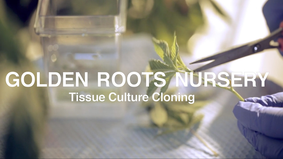 GoldenRootsNursery_Intro1_.mp4