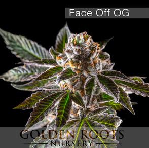 Face_Off_OG(logo).jpg