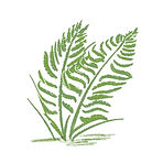fern color.jpg