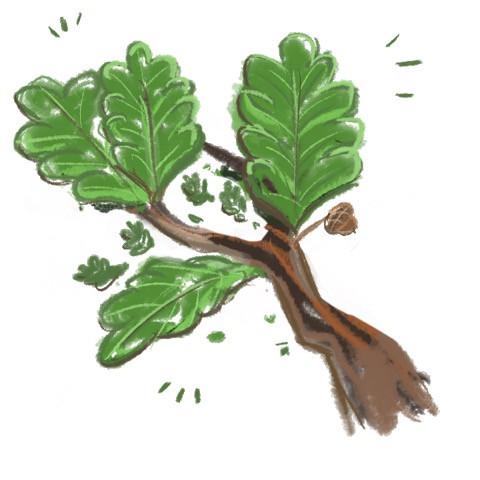 oak branch.jpg