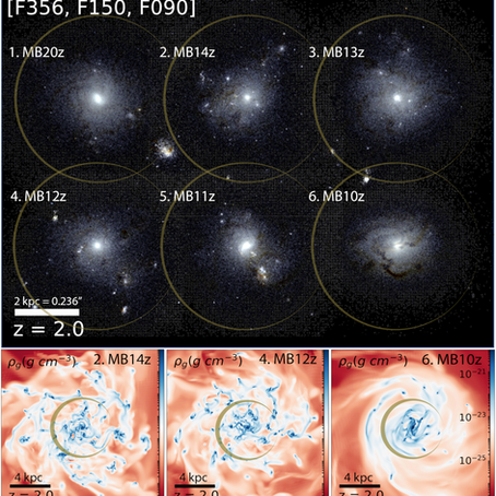 How primordial magnetic fields shrink galaxies