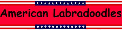 American Labradoodles