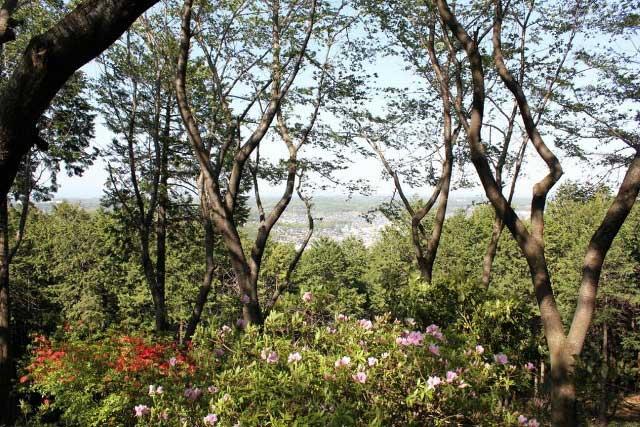 大平山のヤマツツジ