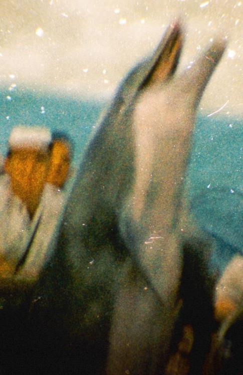 Marineland 1952