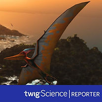 Twig Science Reporter.jpg