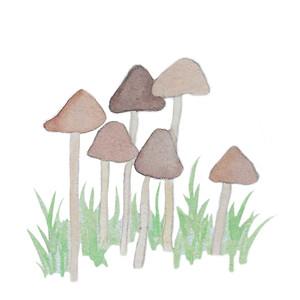 tall mushrooms