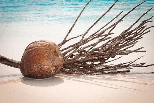 Driftwood & Coconut