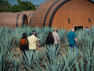 Viva Tequila Festival Mexico Experience Tour honored at Taste Awards