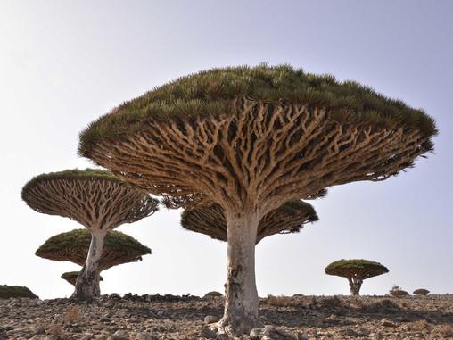 Travel to Socotra island quarantine-free with a direct flight from Abu Dhabi
