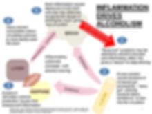 inflammation diagram alcoholism brain liver gut
