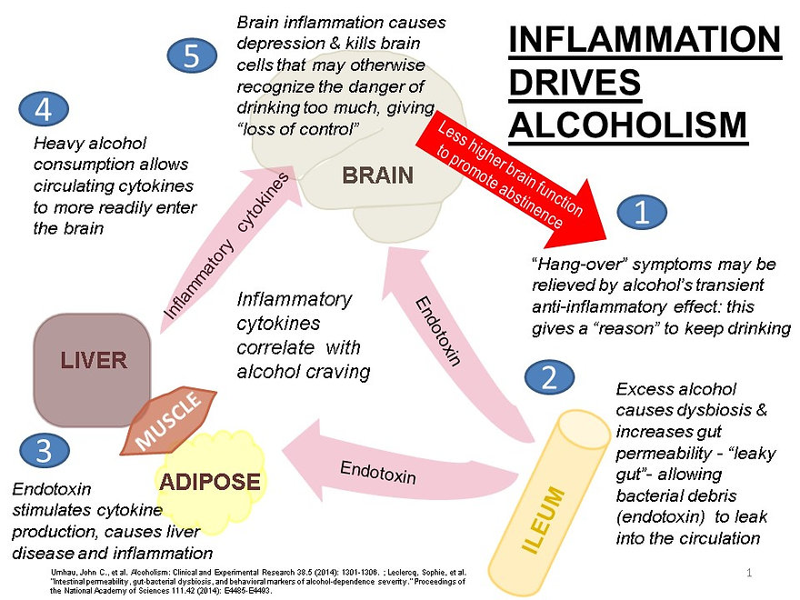 inflammation diagram alcoholism brain liver gut