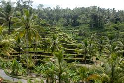 MountBatur-Bali_005