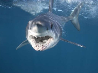 Sharks Are Not Scary!