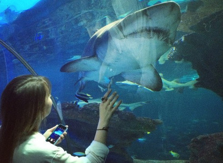 Is it justifiable to keep sharks in captivity?