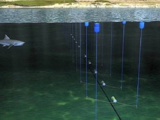 New Shark Deterrent Technology: A Long Way from Nets, Drumlines and Culling