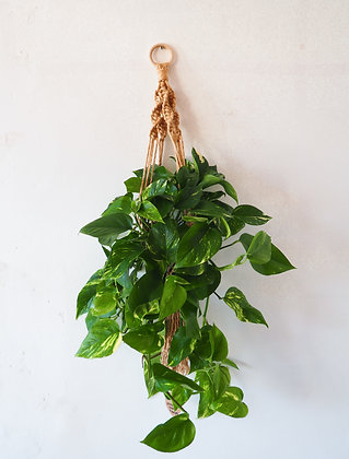 Natural Macrame Hanger with Plant