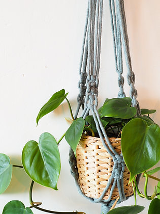Teal Macrame Hanger with Philodendron Scandens