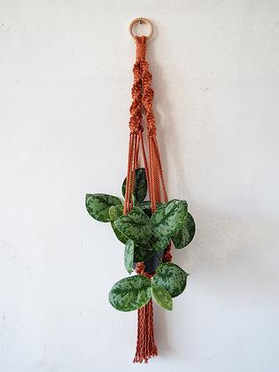 Terracotta Macrame Hanger