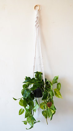 Long White Macrame Hanger and Plant