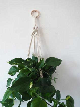 Cream Macrame Hanger with Plant