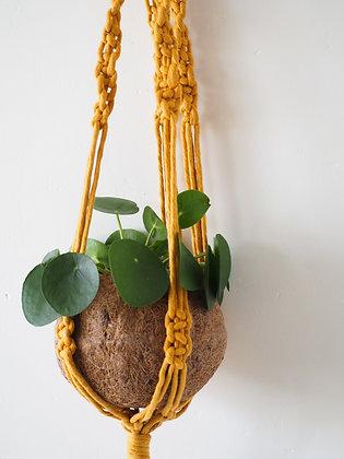 Mustard Macrame Hanger