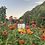 Thumbnail: Rainbow Mix Zinnia Seeds