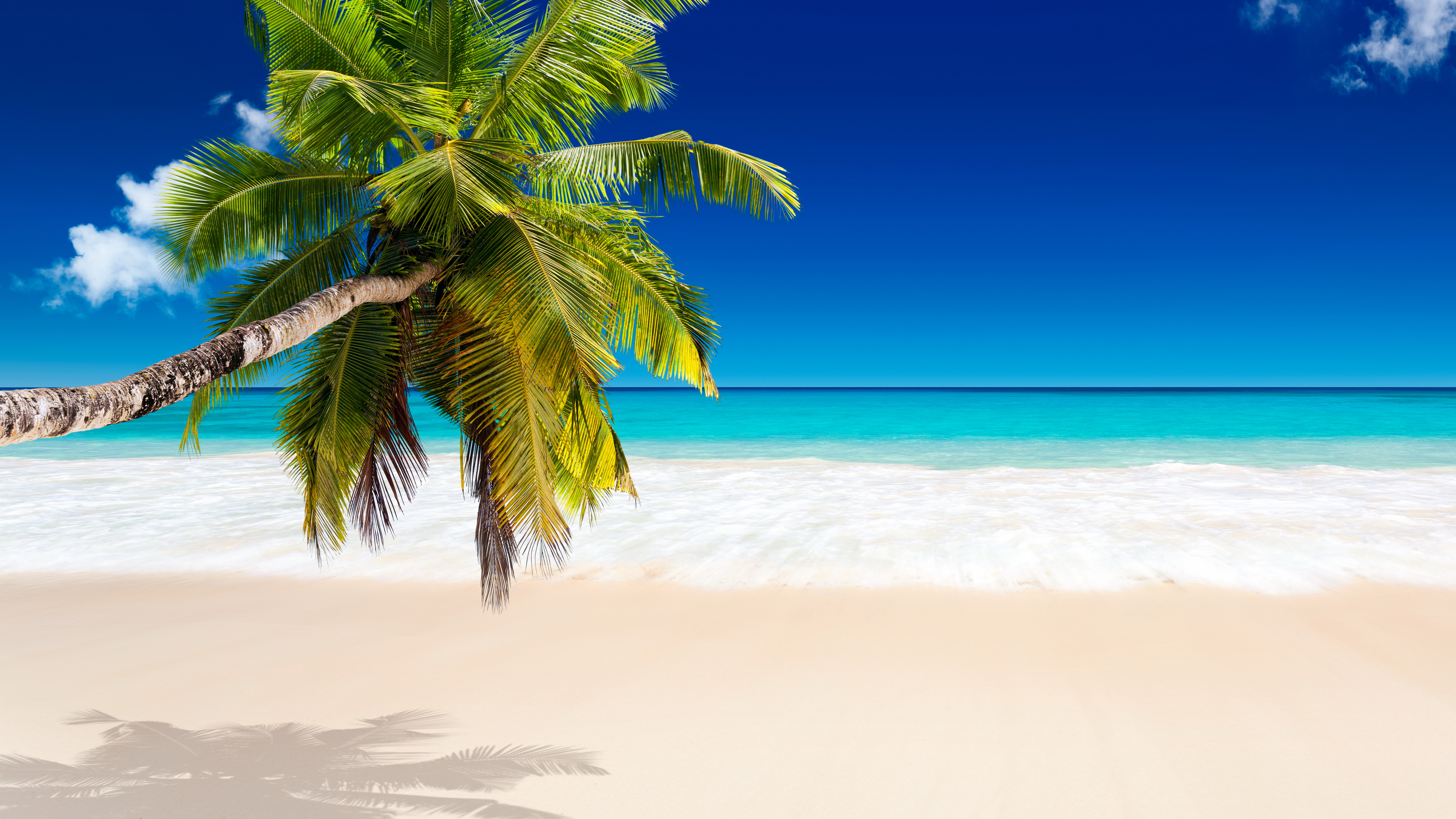 tropical_paradise_sea_palm_beach_sunshine_hd-wallpaper-1783677
