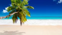 tropical_paradise_sea_palm_beach_sunshine_hd-wallpaper-1783677