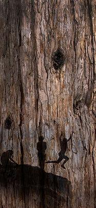 This Tree sample4.jpg