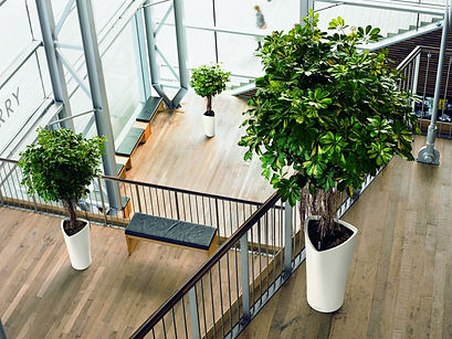 interior plants, plant care, watering