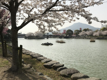 糸島にも本格的な春の訪れです!