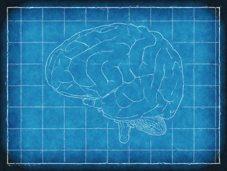 Neuromarketing, estudio de las emociones