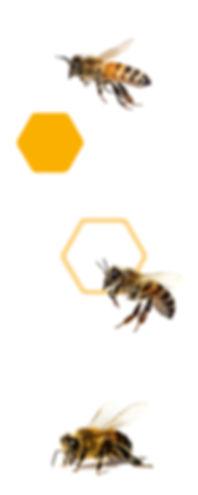 BEE_BANNER copiar.jpg